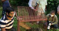১ বছরে হবিগঞ্জের বনাঞ্চলে মুক্ত দেড়শতাধিক প্রাণী